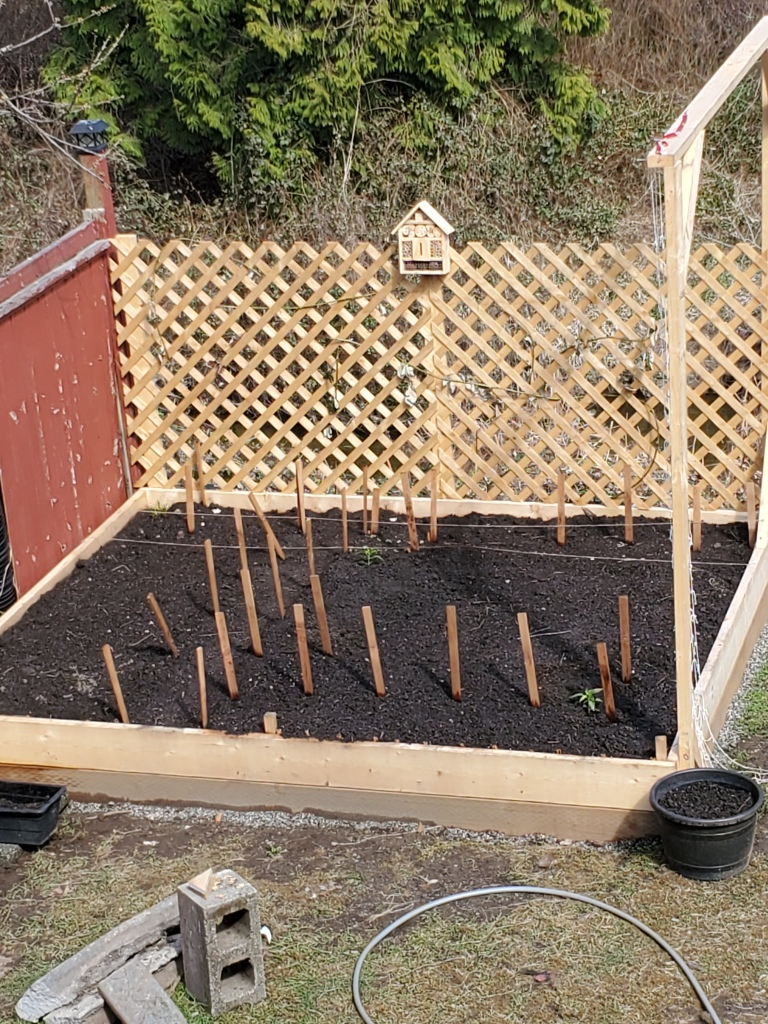 Top view of the newly built and filled raised garden bed. Dark soil with a little bit of green life growing.