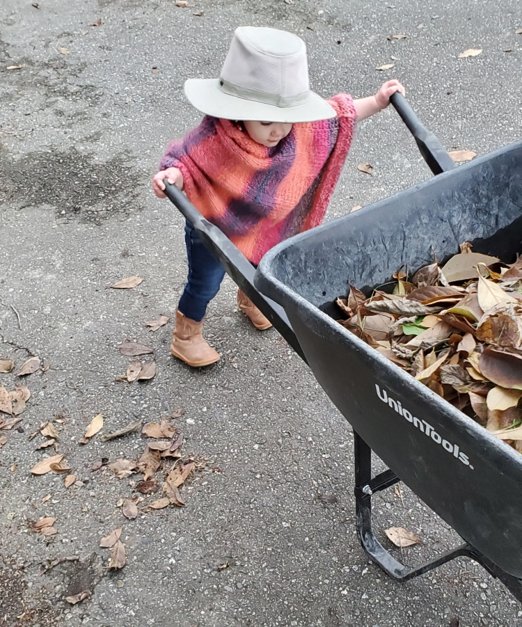 """17 month old, dressed in a colourful pink and purple poncho, """"cowboy"""" boots, and her father's oversized brimmed hat attempting to move a regular sized black wheelbarrow full of leaves"""