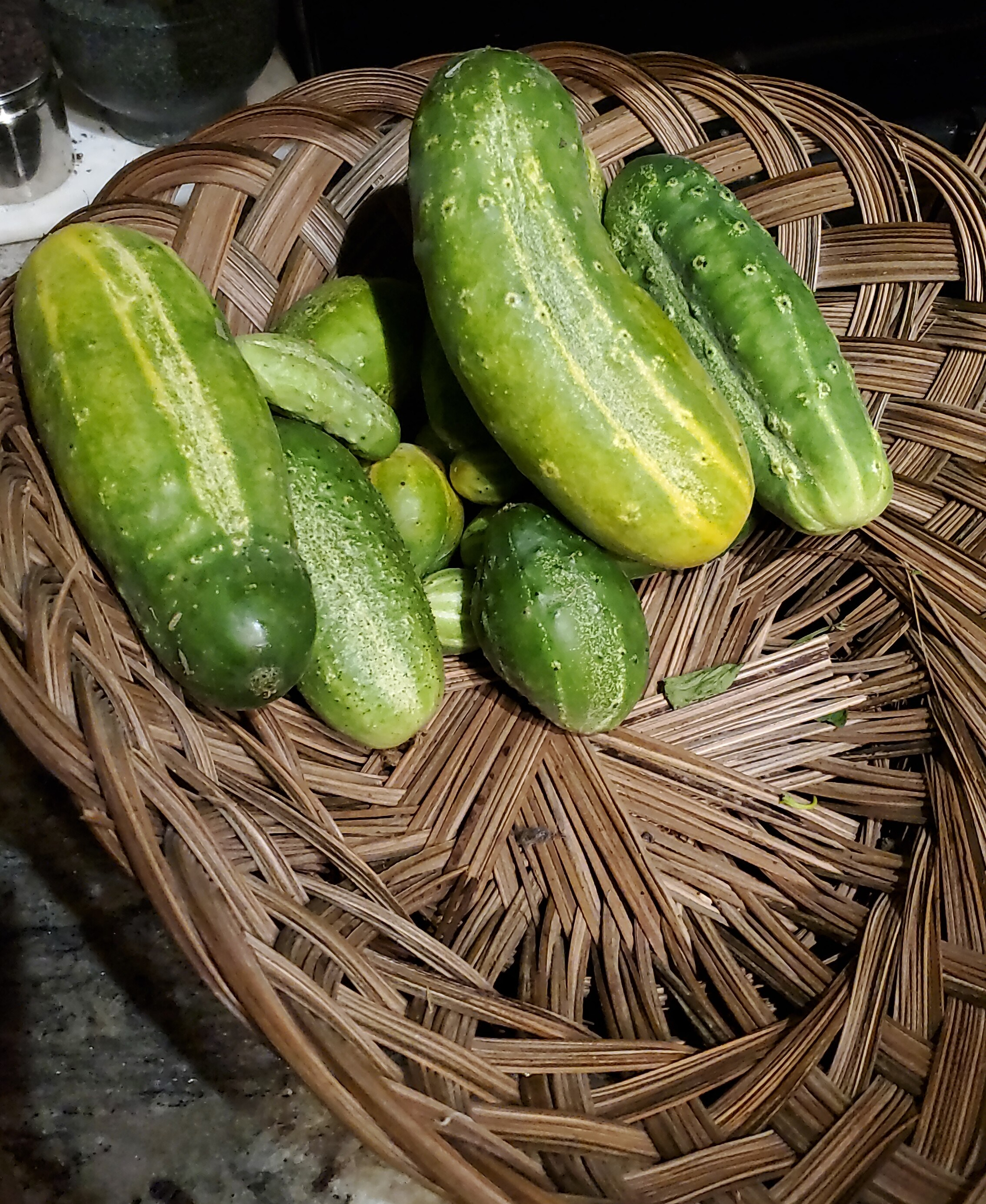 Basket with many different sized cucumbers in it